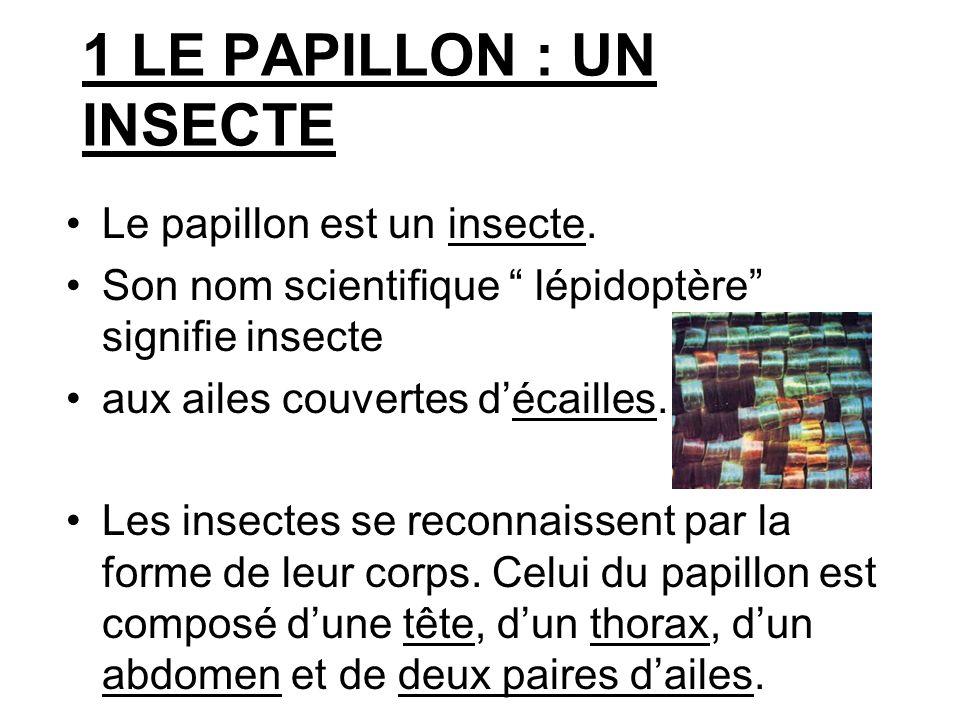 1 LE PAPILLON : UN INSECTE
