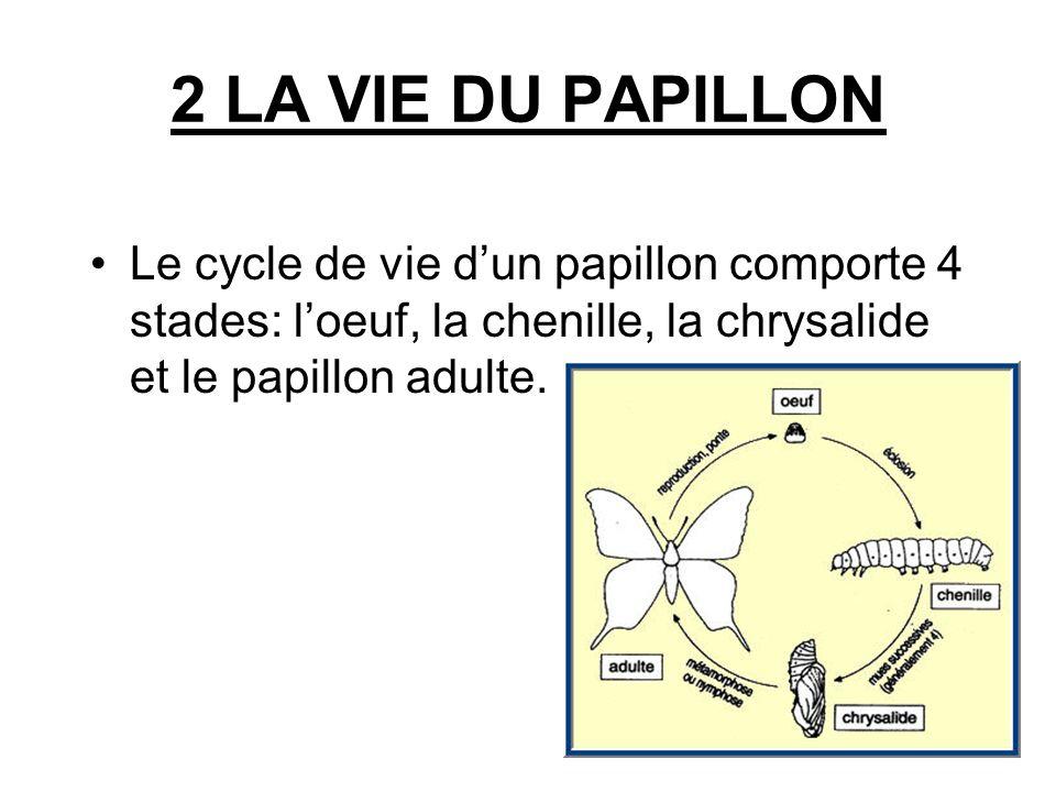 2 LA VIE DU PAPILLON Le cycle de vie d'un papillon comporte 4 stades: l'oeuf, la chenille, la chrysalide et le papillon adulte.