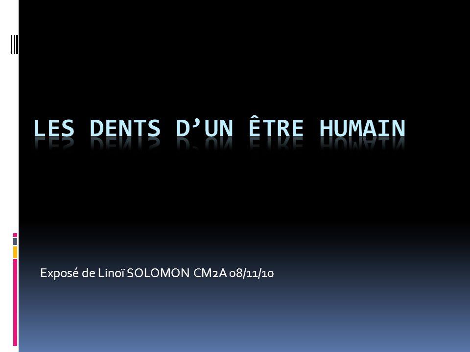Les dents D'UN êTRE HUMAIN