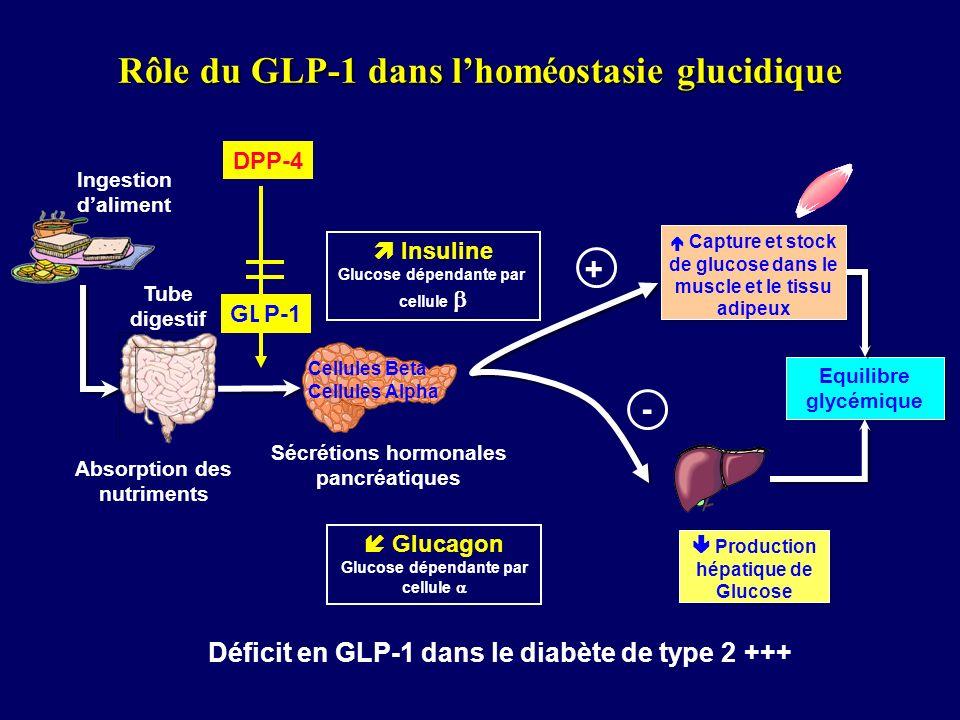 Rôle du GLP-1 dans l'homéostasie glucidique