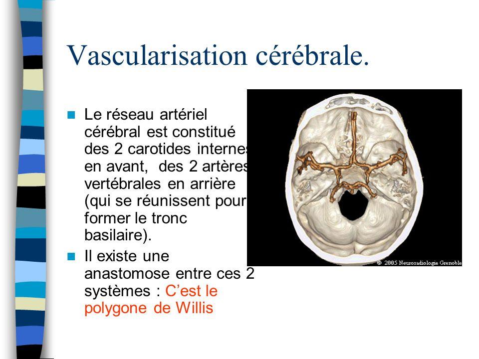 Vascularisation cérébrale.