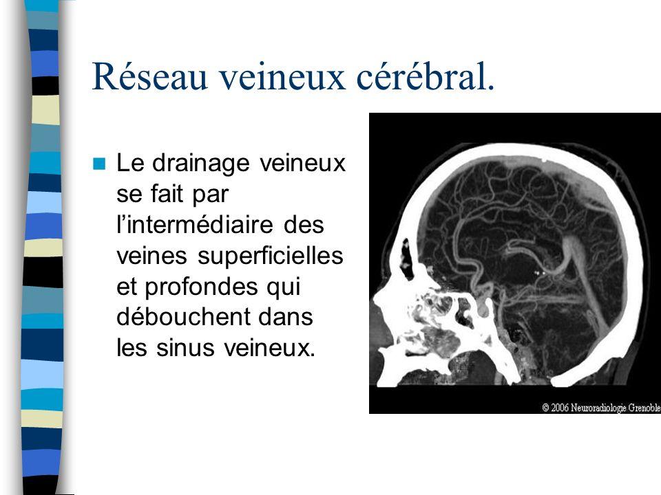 Réseau veineux cérébral.
