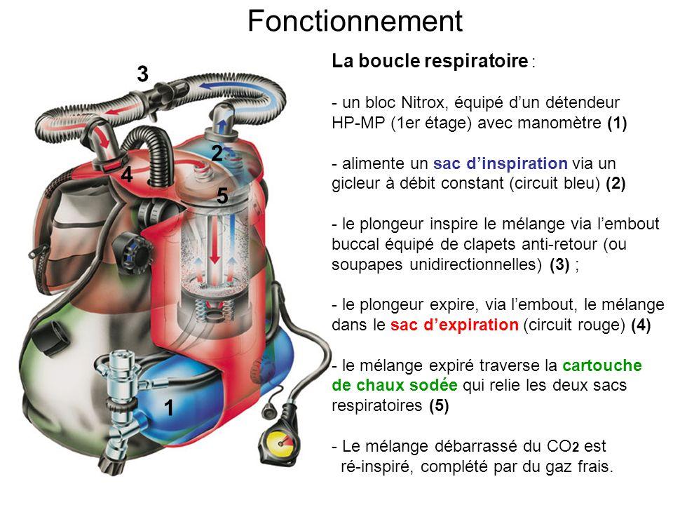 Fonctionnement 3 2 4 5 1 La boucle respiratoire :