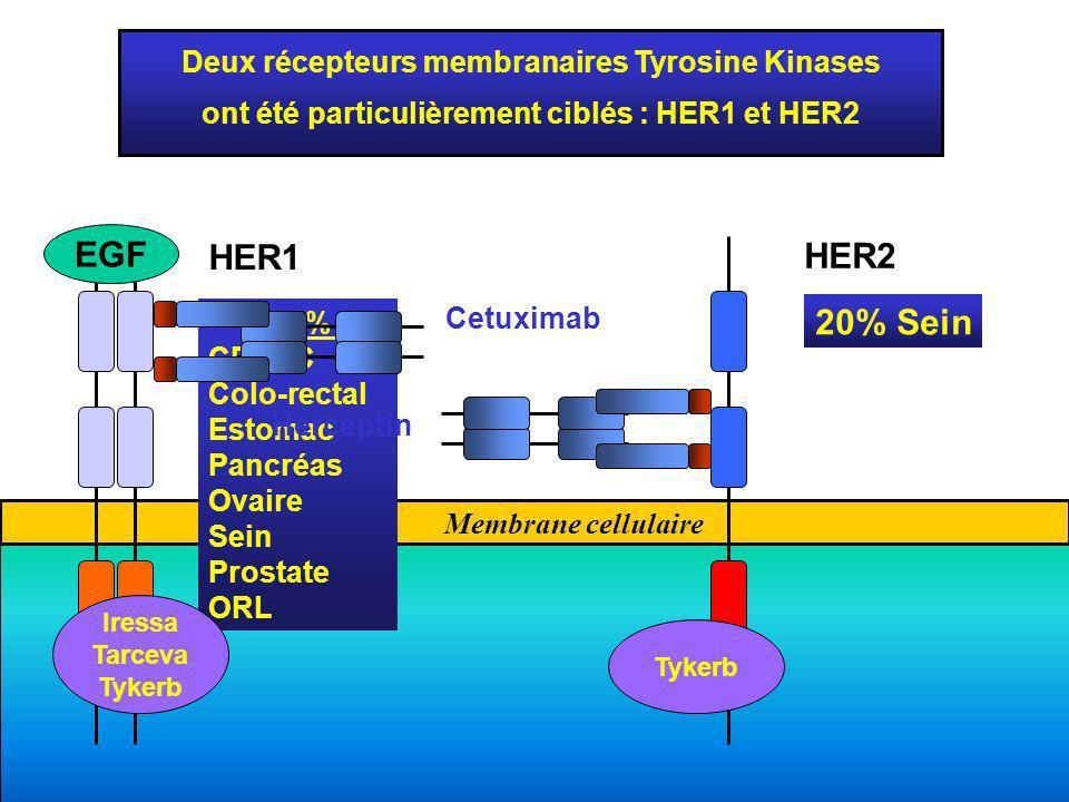 EGF HER1 HER2 20% Sein Deux récepteurs membranaires Tyrosine Kinases