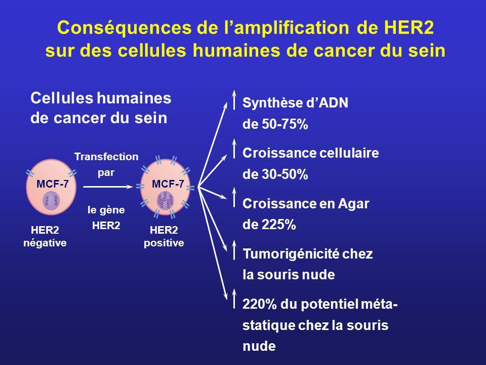 Conséquences de l'amplification de HER2 sur des cellules humaines de cancer du sein