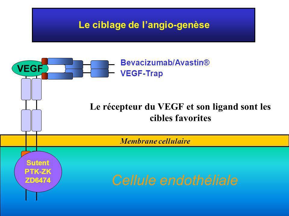 Cellule endothéliale Le ciblage de l'angio-genèse VEGF