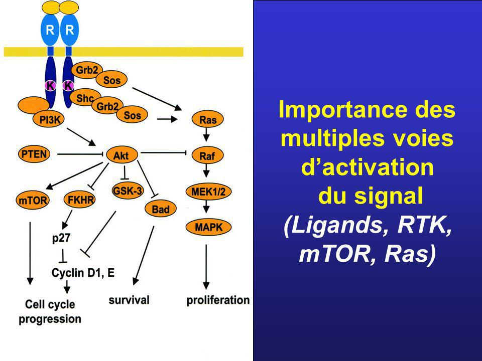 Importance des multiples voies d'activation du signal (Ligands, RTK, mTOR, Ras)