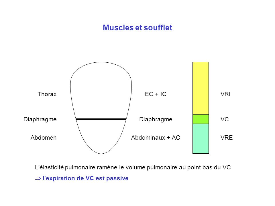 Muscles et soufflet Thorax EC + IC VRI Diaphragme Diaphragme VC