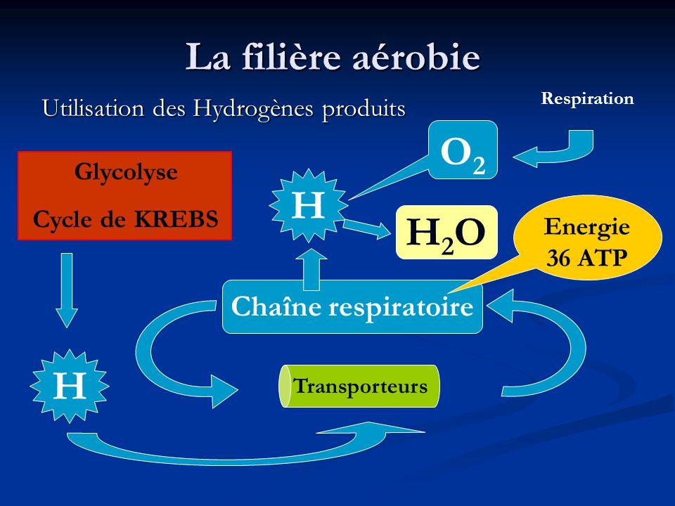 La filière aérobie O2 H2O H H