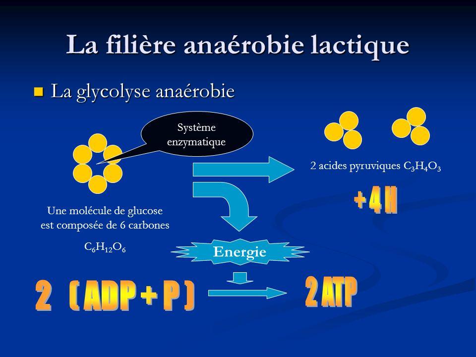 La filière anaérobie lactique
