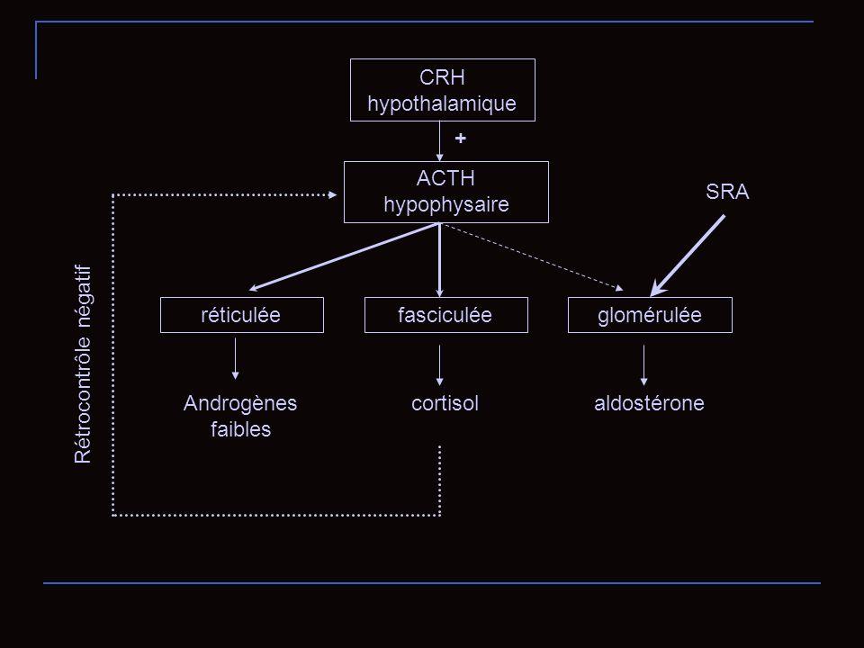 CRH hypothalamique + ACTH hypophysaire. SRA. réticulée. fasciculée. glomérulée. Rétrocontrôle négatif.