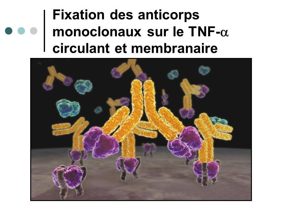Fixation des anticorps monoclonaux sur le TNF-a circulant et membranaire