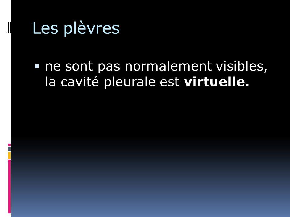 Les plèvres ne sont pas normalement visibles, la cavité pleurale est virtuelle.