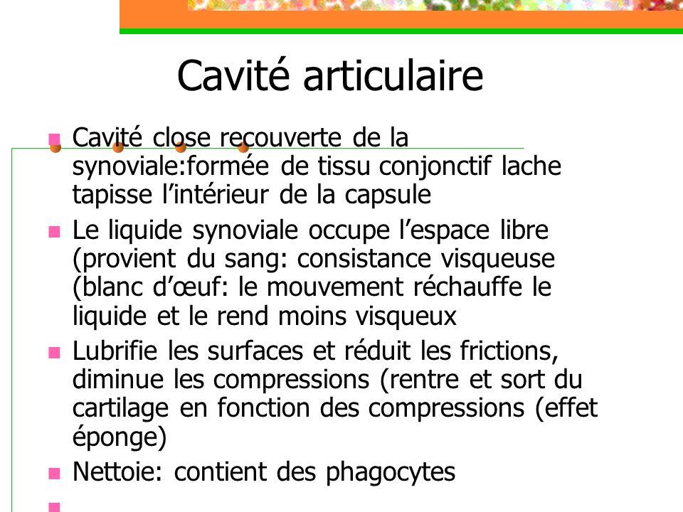 Cavité articulaire Cavité close recouverte de la synoviale:formée de tissu conjonctif lache tapisse l'intérieur de la capsule.