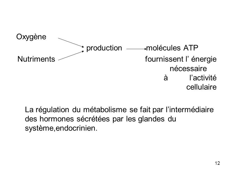 Oxygène production molécules ATP. Nutriments fournissent l' énergie nécessaire à l'activité cellulaire.