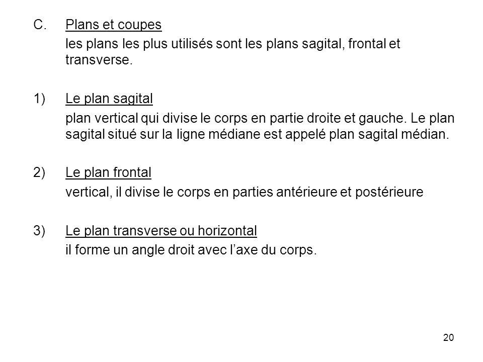 Plans et coupes les plans les plus utilisés sont les plans sagital, frontal et transverse. Le plan sagital.