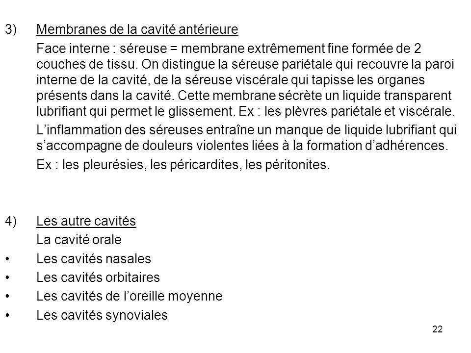 Membranes de la cavité antérieure