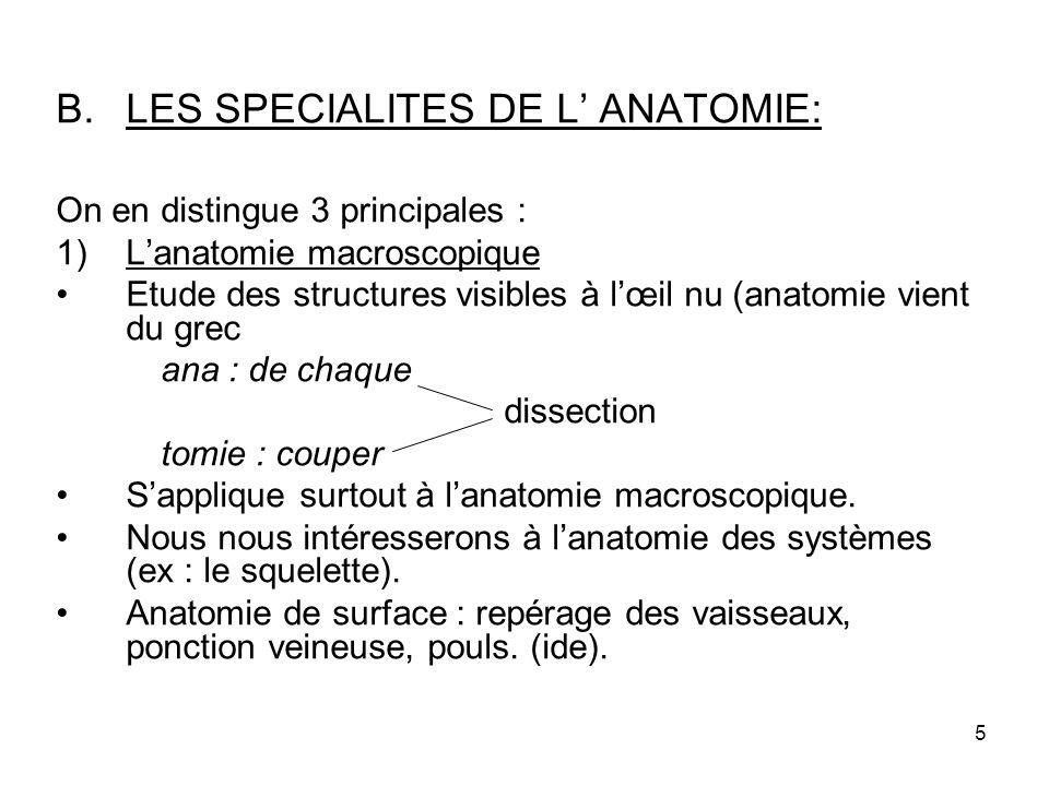 LES SPECIALITES DE L' ANATOMIE: