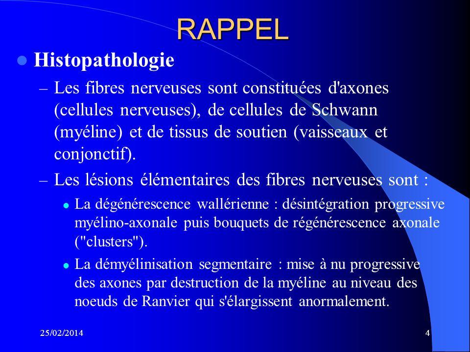 RAPPEL Histopathologie