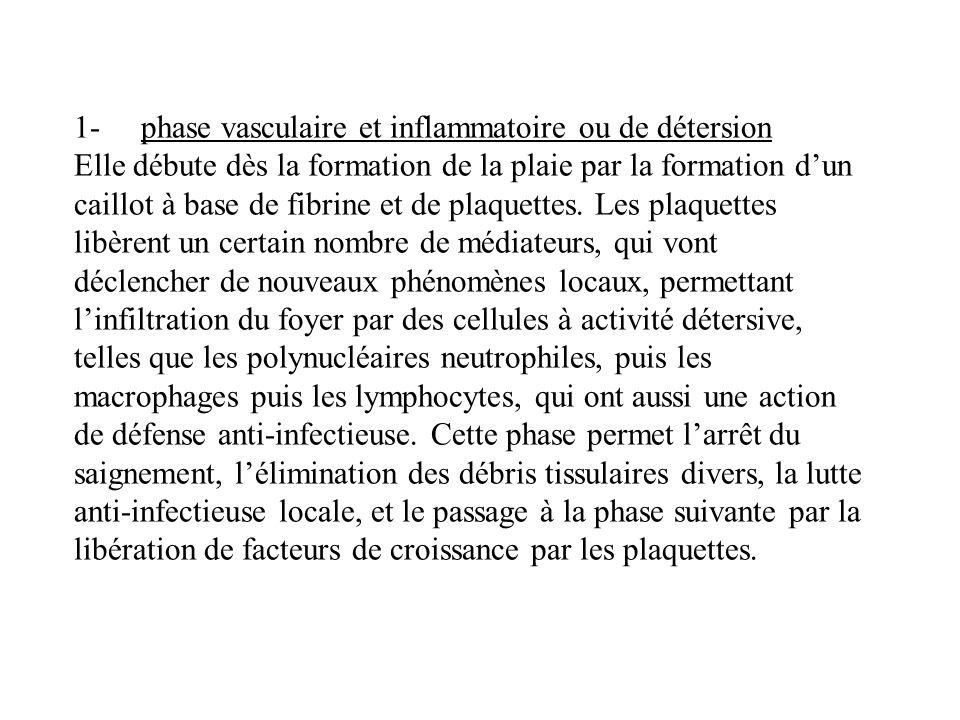 1- phase vasculaire et inflammatoire ou de détersion Elle débute dès la formation de la plaie par la formation d'un caillot à base de fibrine et de plaquettes.