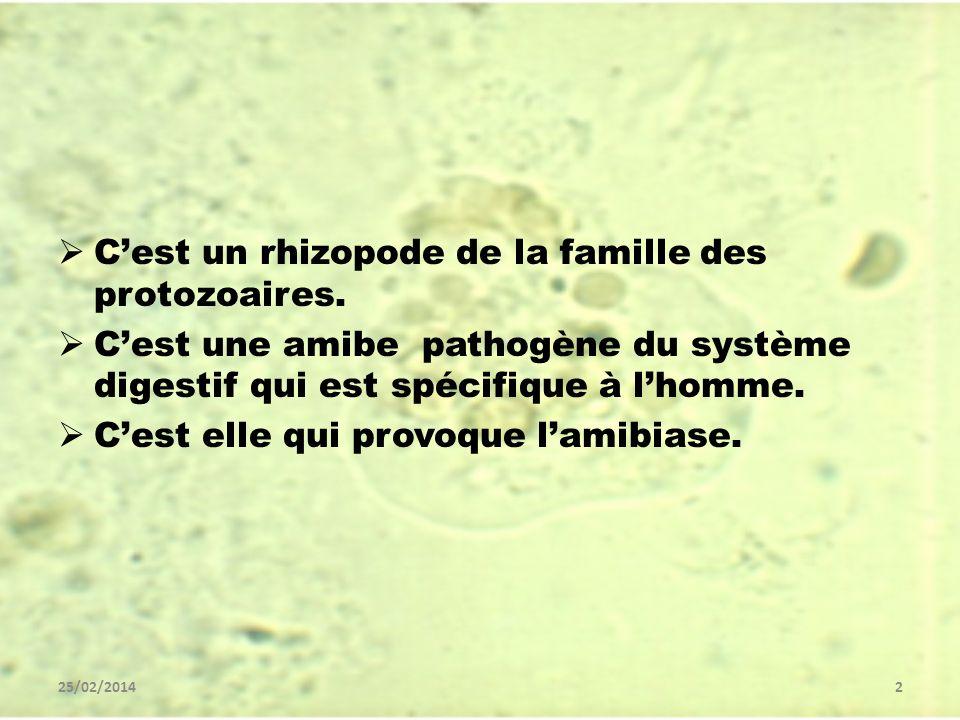 C'est un rhizopode de la famille des protozoaires.