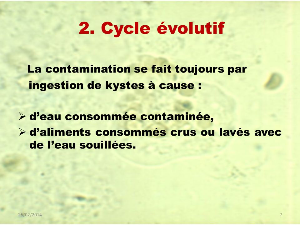 2. Cycle évolutif La contamination se fait toujours par