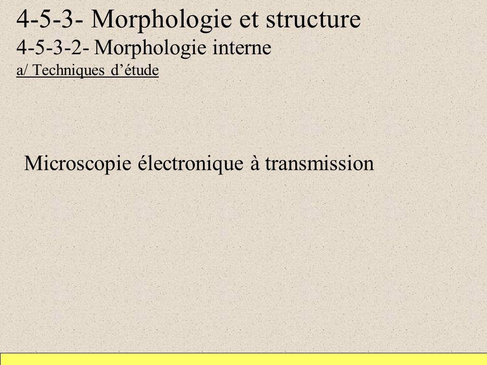 4-5-3- Morphologie et structure 4-5-3-2- Morphologie interne a/ Techniques d'étude