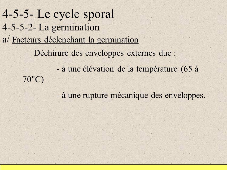 4-5-5- Le cycle sporal 4-5-5-2- La germination a/ Facteurs déclenchant la germination