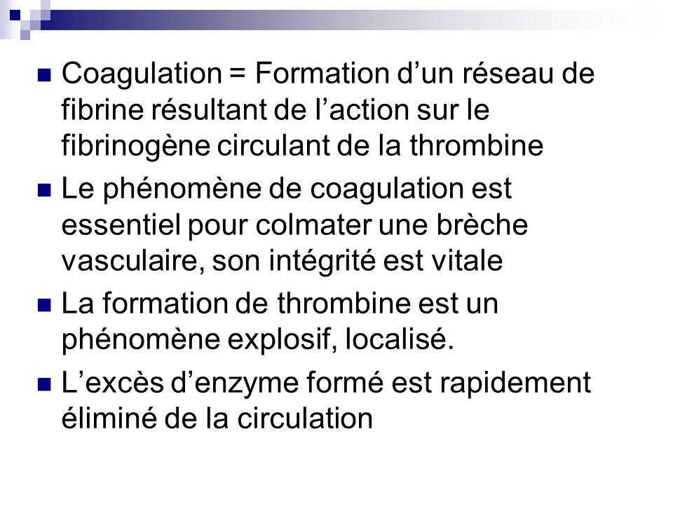 Coagulation = Formation d'un réseau de fibrine résultant de l'action sur le fibrinogène circulant de la thrombine