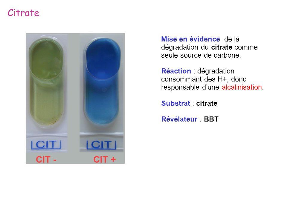Citrate Mise en évidence de la dégradation du citrate comme seule source de carbone.