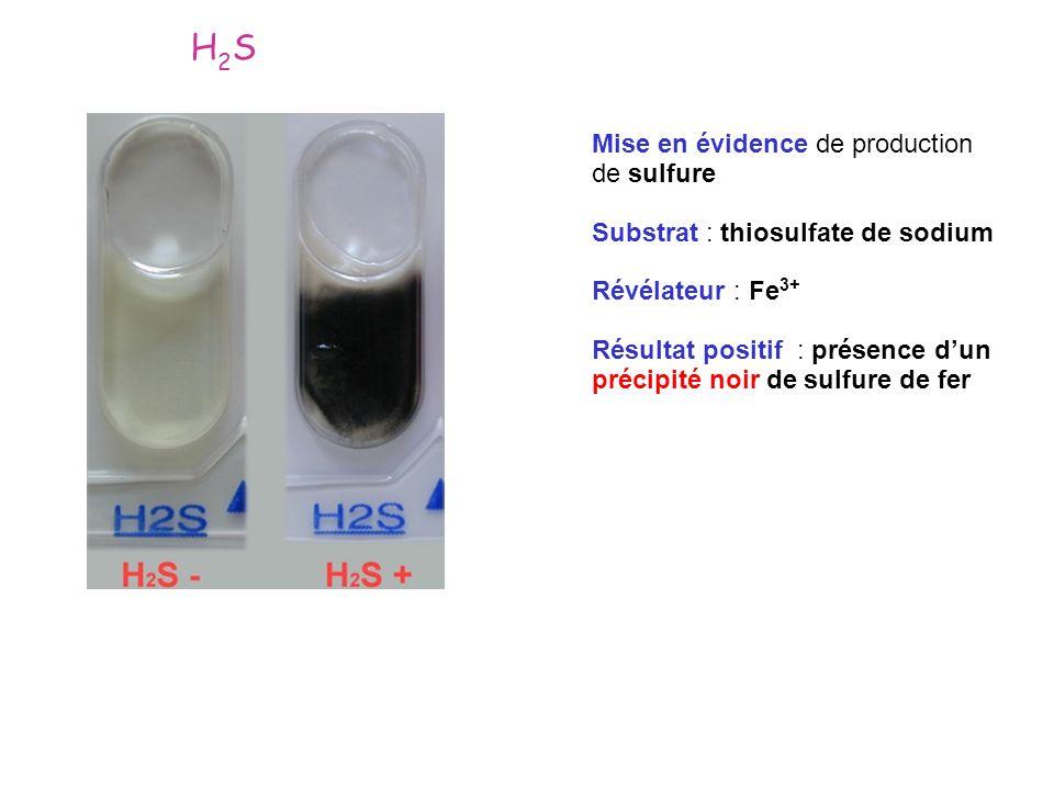 H2S Mise en évidence de production de sulfure