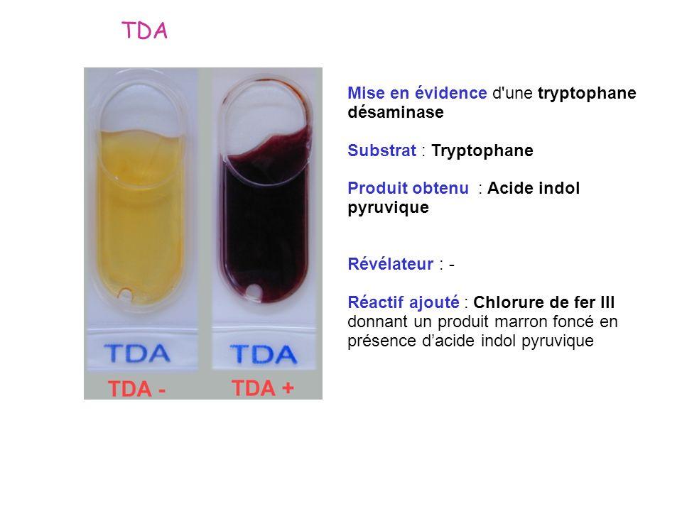 TDA Mise en évidence d une tryptophane désaminase