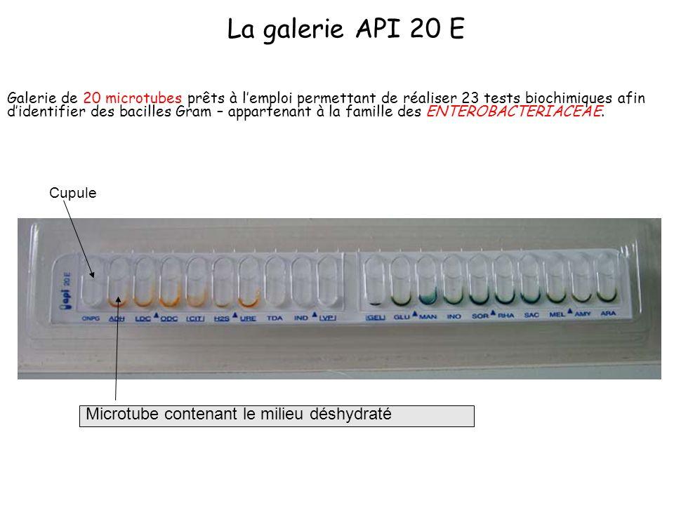 La galerie API 20 E Microtube contenant le milieu déshydraté