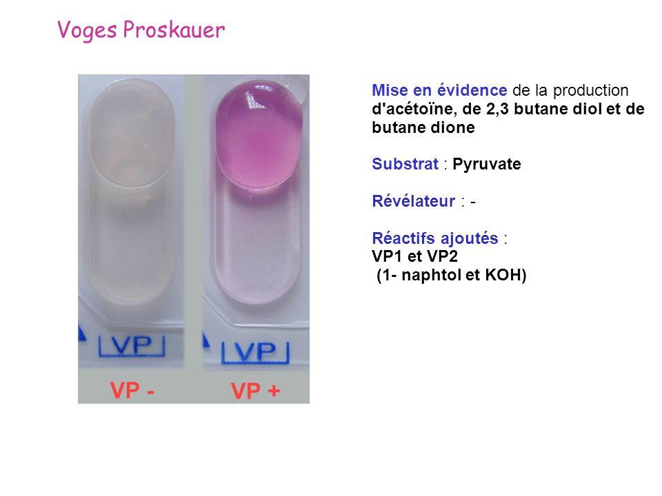 Voges ProskauerMise en évidence de la production d acétoïne, de 2,3 butane diol et de butane dione.