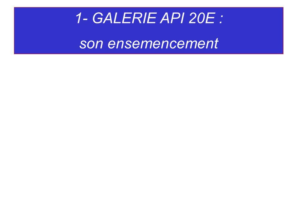 1- GALERIE API 20E : son ensemencement