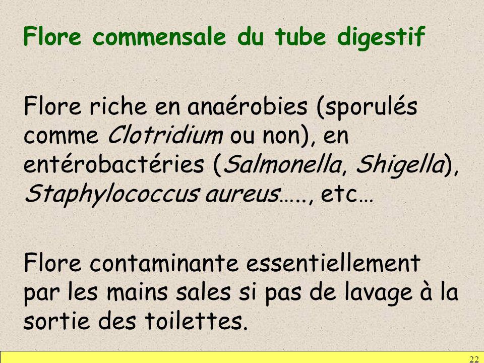 Flore commensale du tube digestif