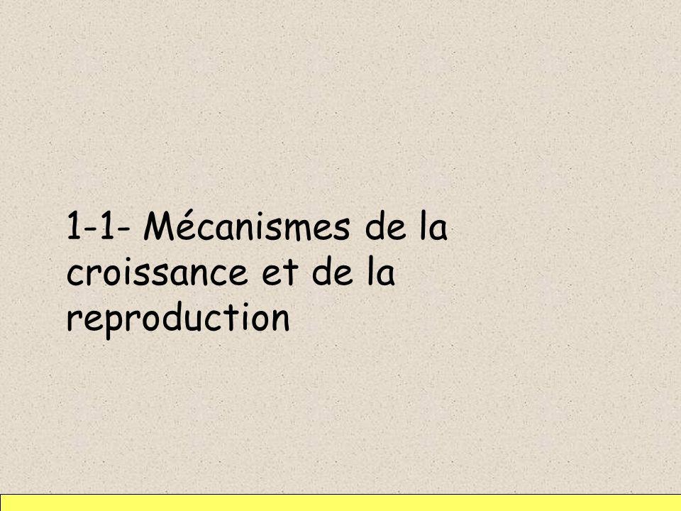 1-1- Mécanismes de la croissance et de la reproduction