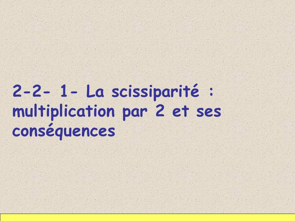 2-2- 1- La scissiparité : multiplication par 2 et ses conséquences