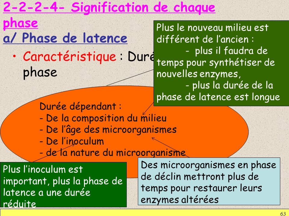 Signification de chaque phase a/ Phase de latence