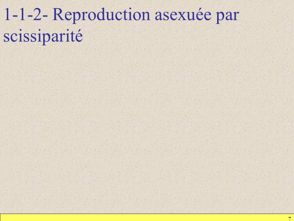 1-1-2- Reproduction asexuée par scissiparité