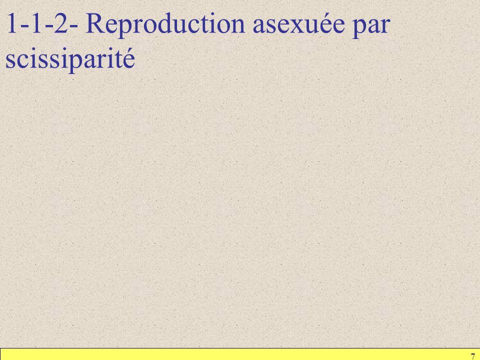 1-1-2- Reproduction asexuée par scissiparité