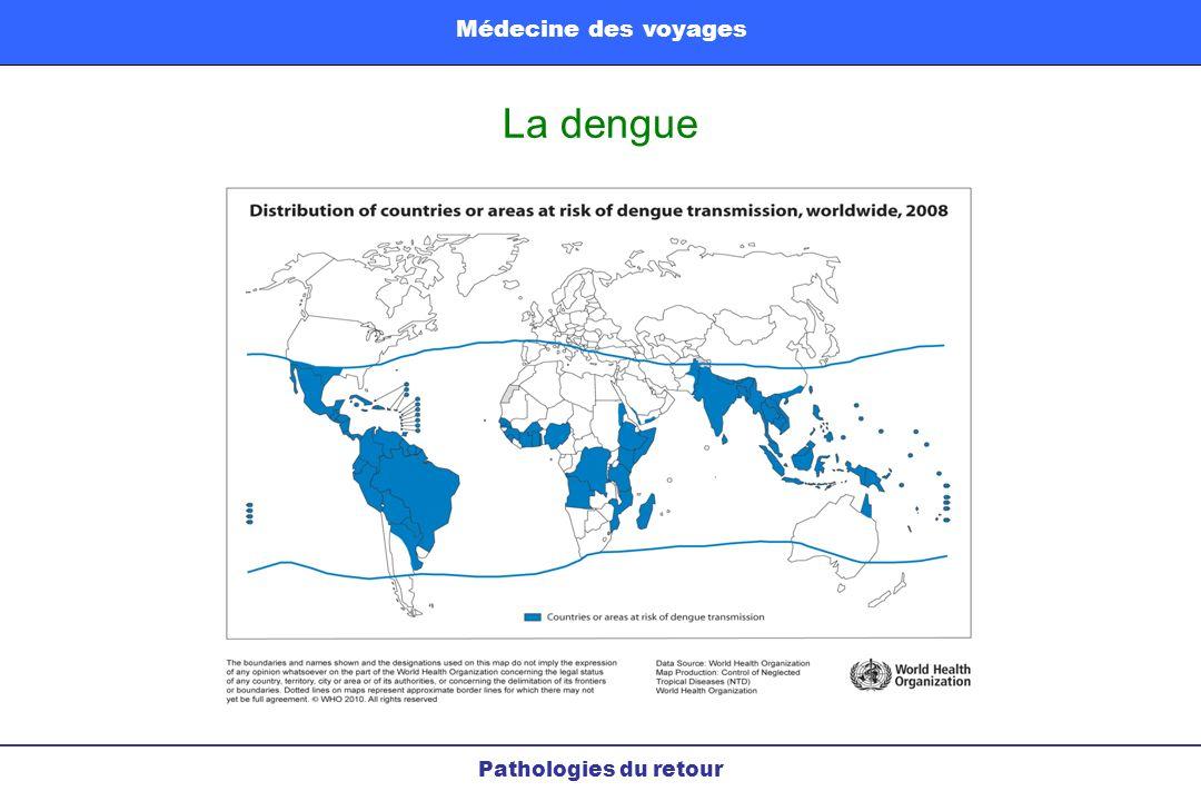 Médecine des voyages La dengue Pathologies du retour