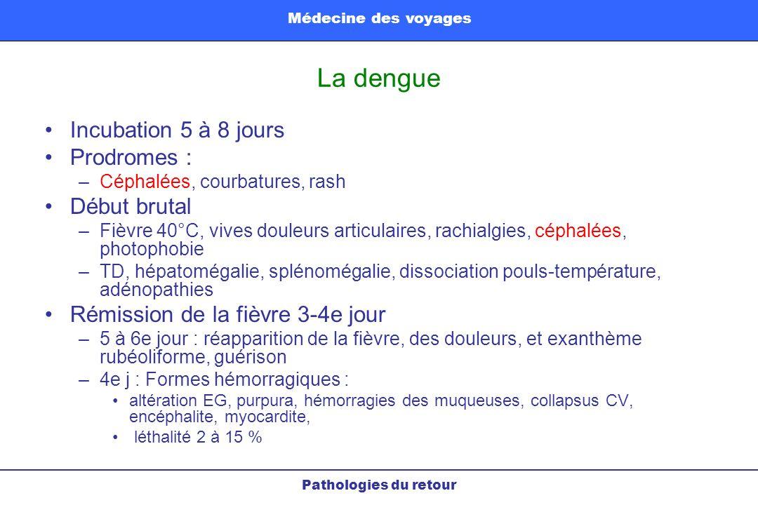 La dengue Incubation 5 à 8 jours Prodromes : Début brutal