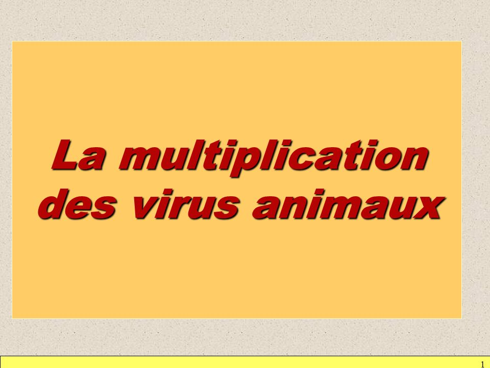 La multiplication des virus animaux