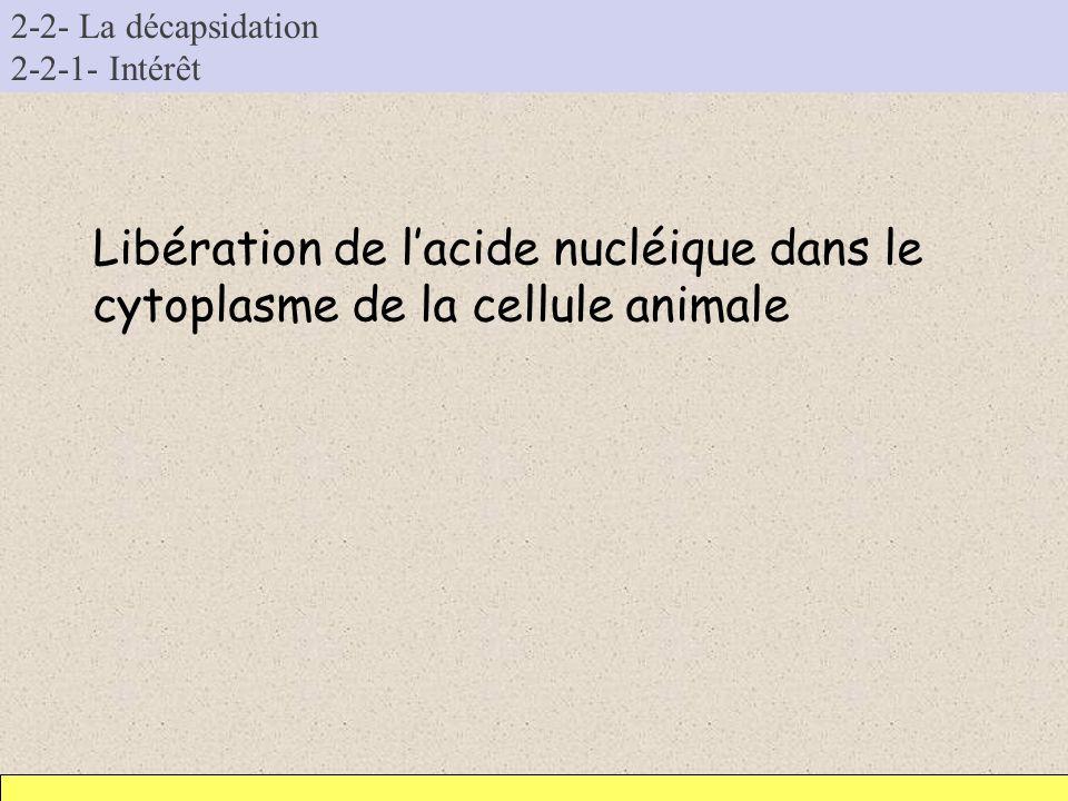 2-2- La décapsidation 2-2-1- Intérêt