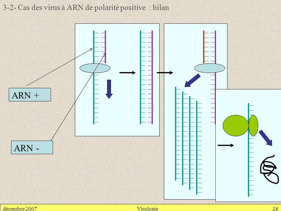 3-2- Cas des virus à ARN de polarité positive : bilan
