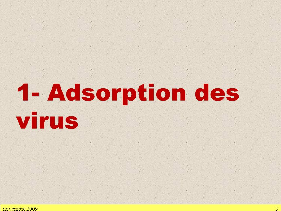 1- Adsorption des virus novembre 2009