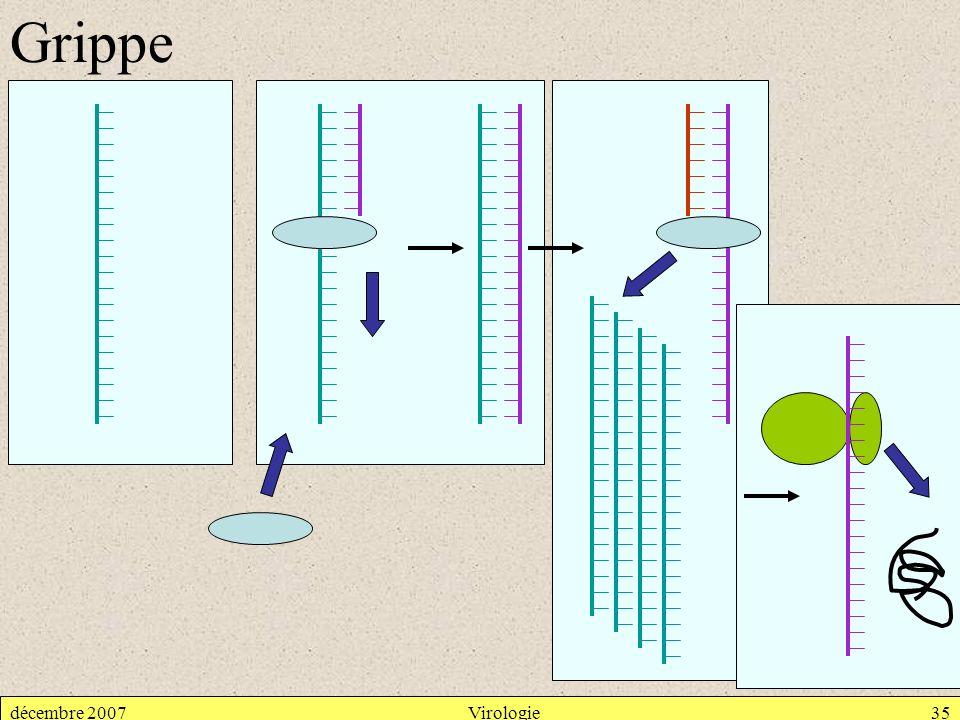 Grippe décembre 2007 Virologie