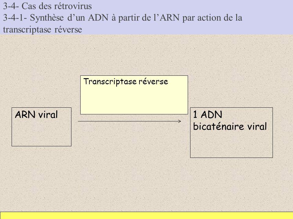 3-4- Cas des rétrovirus 3-4-1- Synthèse d'un ADN à partir de l'ARN par action de la transcriptase réverse