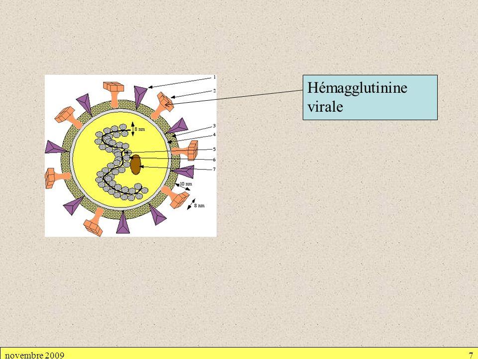Hémagglutinine virale